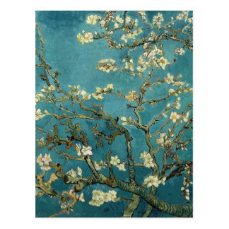 Almond Branches in Bloom Postcard