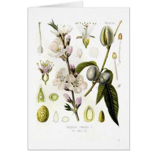 Almond Greeting Card