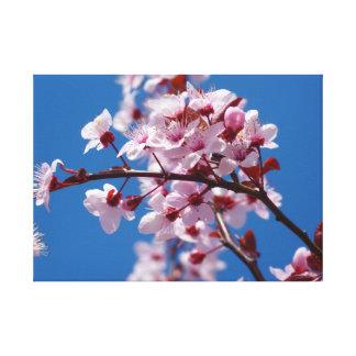 Almond flower canvas print