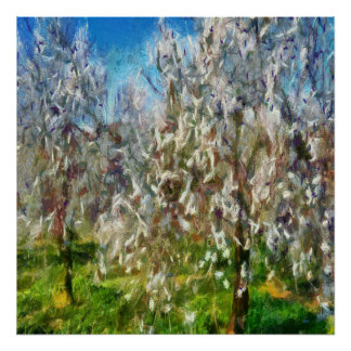 Almond Orchard Blossom Poster