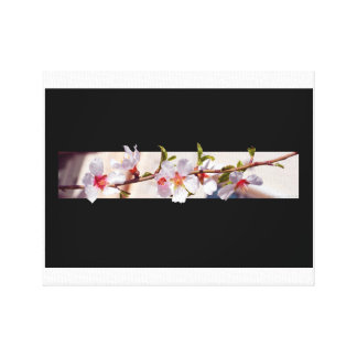 almond tree flowers blossom wrapped canvas