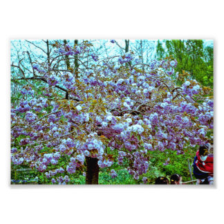 Almond Tree in Monet's Garden Photo Print