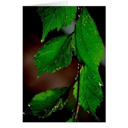 Almond Tree Leaves Card