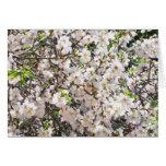 Almond's Blossom Cards