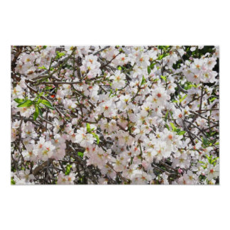 Almond's Blossom Poster