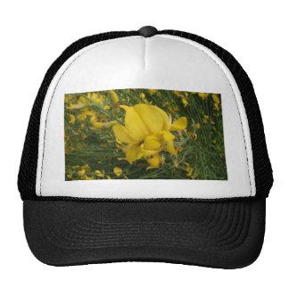 Almorta amarilla gorras de camionero