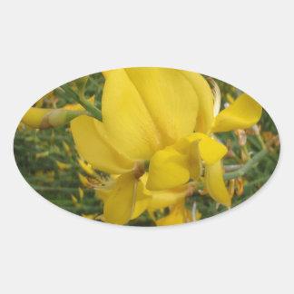 Almorta amarilla pegatina ovalada
