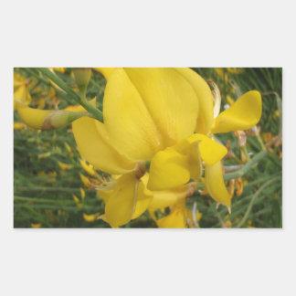 Almorta amarilla pegatina rectangular