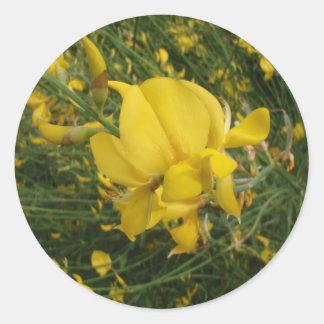 Almorta amarilla pegatina redonda