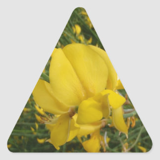 Almorta amarilla pegatina triangular