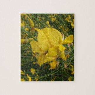 Almorta amarilla puzzles con fotos