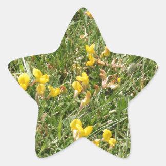 Almorta de los prados pegatina en forma de estrella