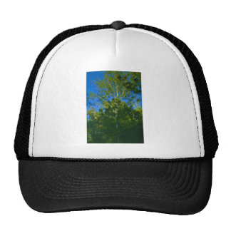 Almost an Oil Trucker Hat