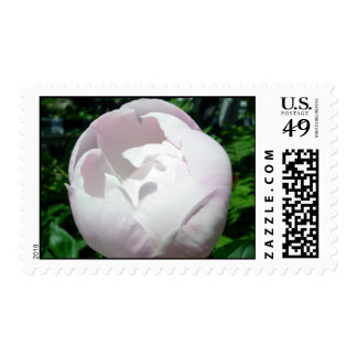 Almost Pink Stamps