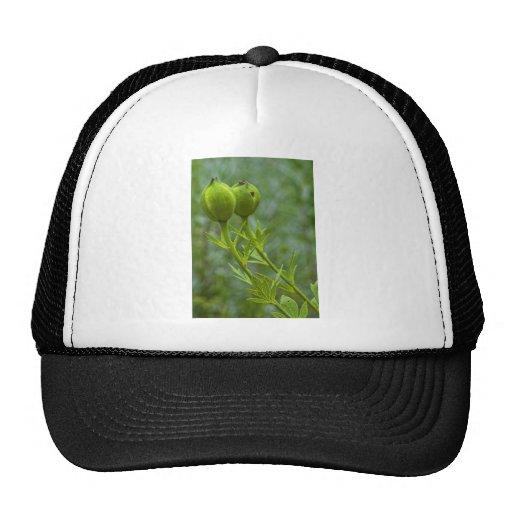 Almost Poppies Trucker Hat