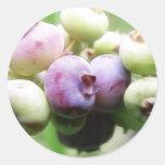 Almost Ripe - Blueberries Classic Round Sticker
