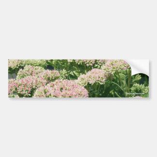 Almost Sedum Flower Photo Bumper Sticker