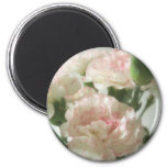 Almost White Carnations 6 Refrigerator Magnet