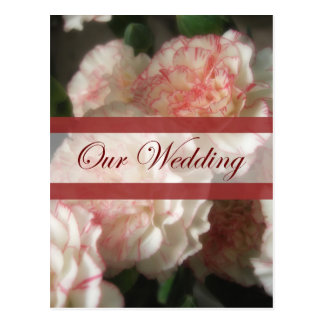Almost White Carnations 7 Our Wedding Postcard