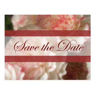 Almost White Carnations 7 Save the Date Wedding Postcard