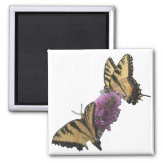 Almuerzo 2 de la mariposa imán cuadrado