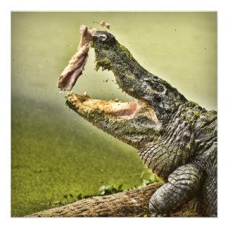 Almuerzo de cogida del cocodrilo comunicados