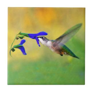 Almuerzo del colibrí azulejo cuadrado pequeño