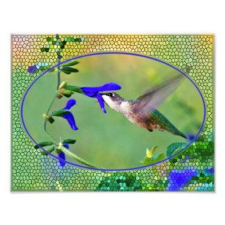 Almuerzo del colibrí arte fotografico