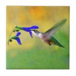 Almuerzo del colibrí teja cerámica