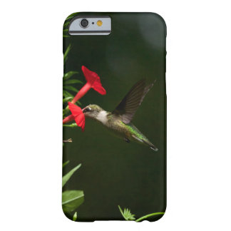 Almuerzo Throated de rubíes Funda Barely There iPhone 6