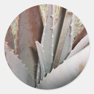 Aloe 1 Close Up Classic Round Sticker
