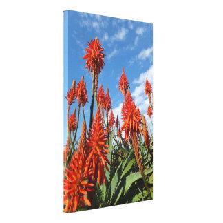 Aloe Arborescens canvas print
