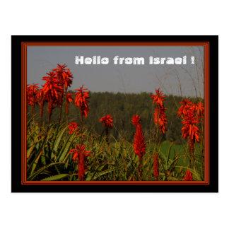 Aloe arborescens Postcard