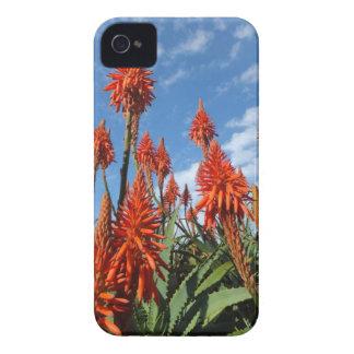 Aloe Arborescents iPhone 4 Case-Mate iPhone 4 Case-Mate Case