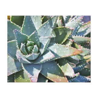 Aloe brevifolia by Debra Lee Baldwin Gallery Wrap Canvas
