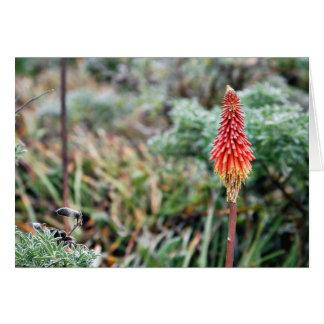 Aloe Flower Card