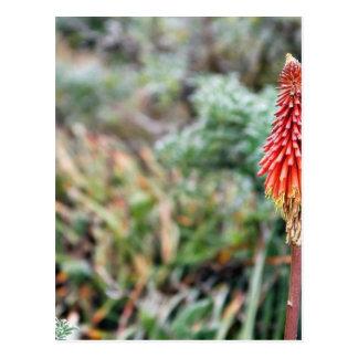 Aloe Flower Postcard
