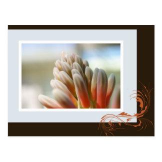 Aloe Flower Spike Postcard