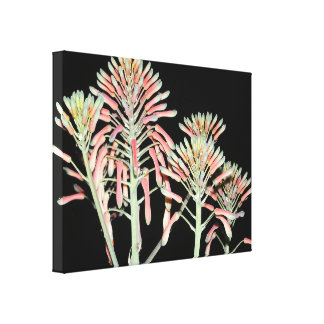 Aloe Flower Stretched Canvas Print 24x18