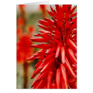 Aloe flowers card