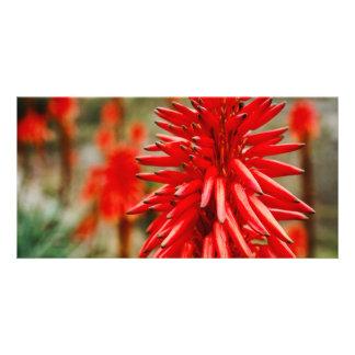 Aloe flowers photo cards