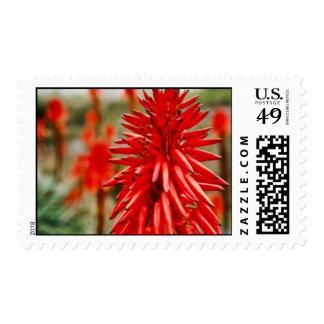 Aloe flowers Postage
