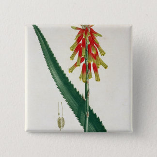 Aloe from 'Phytographie Medicale' by Joseph Roques Button