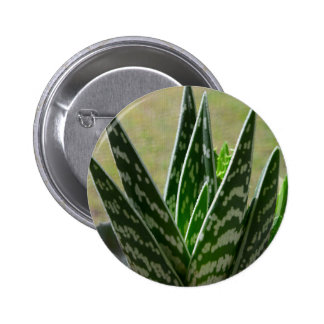 "Aloe ""Gator"" Variegata Succulent Pins"