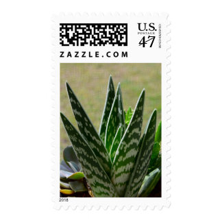 "Aloe ""Gator"" Variegata Succulent Stamp"