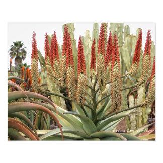 Áloe grande en la floración fotografía