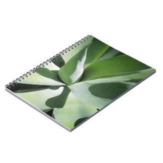 Aloe image on notebook cover. Cool green tones