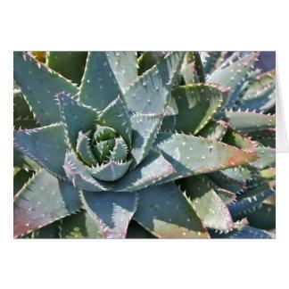 Aloe note card by Debra Lee Baldwin