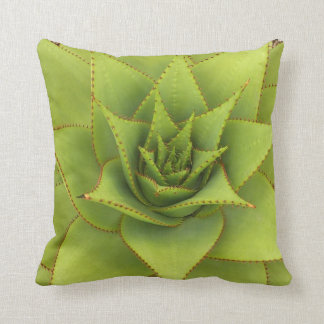 Aloe pillow by Debra Lee Baldwin