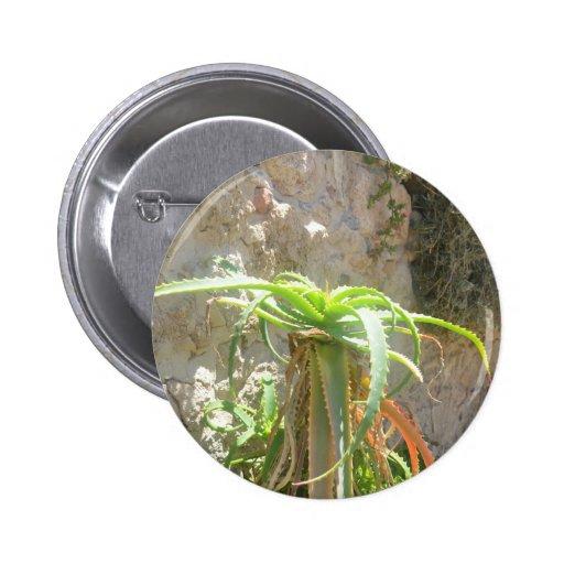Aloe Plant. Pinback Button